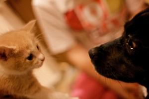 Cat and dog-Tim Dorr